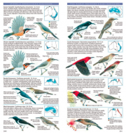 Field Guide to Australian Birds, Complete Compact Edition plate image