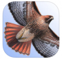 The Sibley eGuide to the Birds of North America (iOS & Android App)