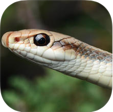 Southern California Reptiles & Amphibians