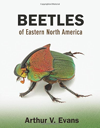 cover Beetles of Eastern North America