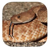 California Rattlesnakes (iOS & Android app)