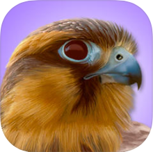 iBird Pro log
